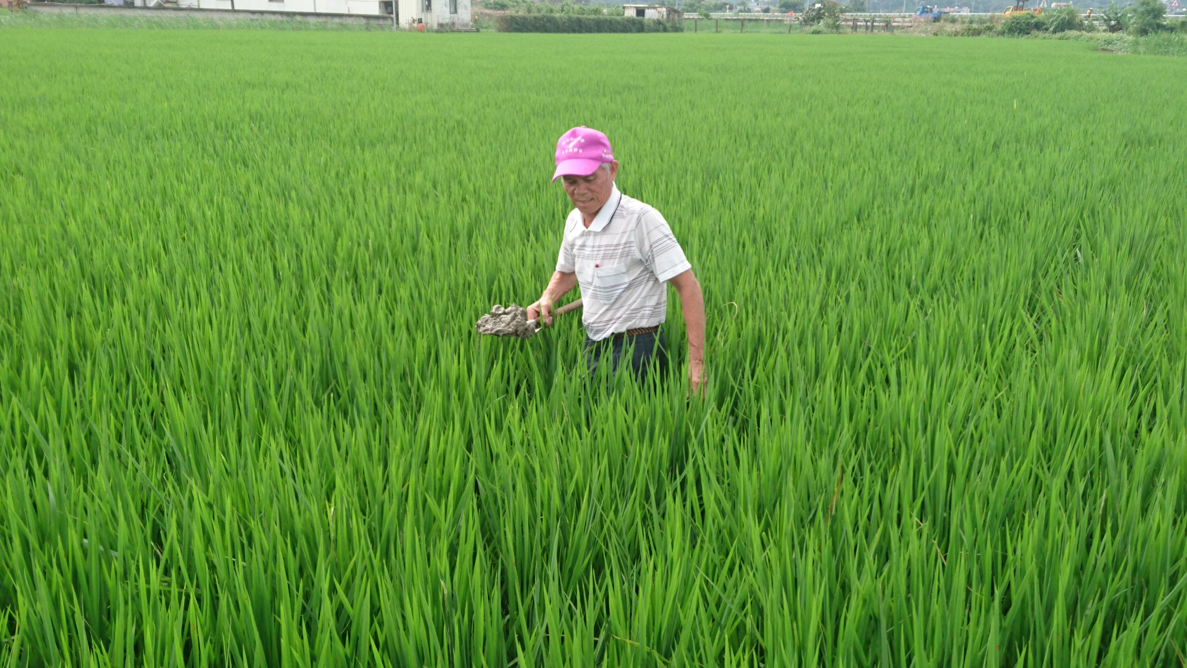 鼓勵農民轉型友善耕作